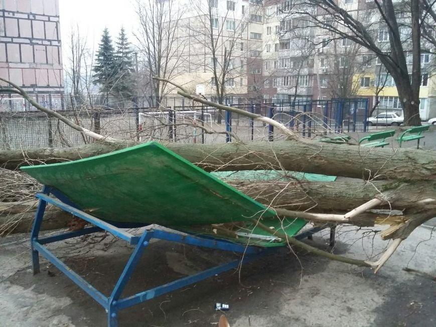 На Соколе огромное дерево рухнуло прямо возле детской площадки (ФОТО) (фото) - фото 2