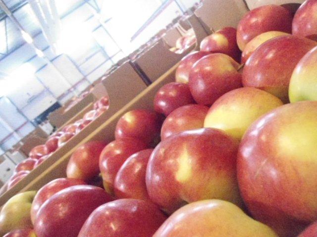Себежская таможня выявила более 276 тонн санкционной продукции (фото) - фото 2