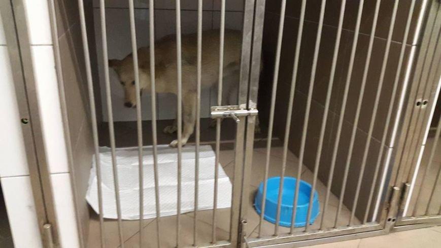 В Киеве неизвестные отравили собак (ФОТО), фото-1