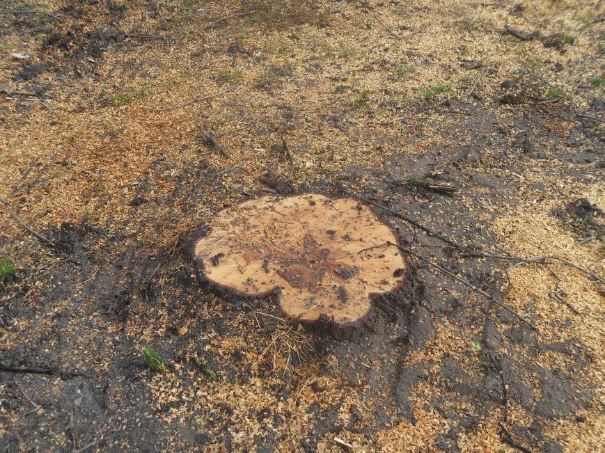 На Южном вокзале спилили около тридцати деревьев (ФОТО) (фото) - фото 7