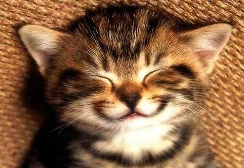 Свято сміху та розіграшу (фото) - фото 4