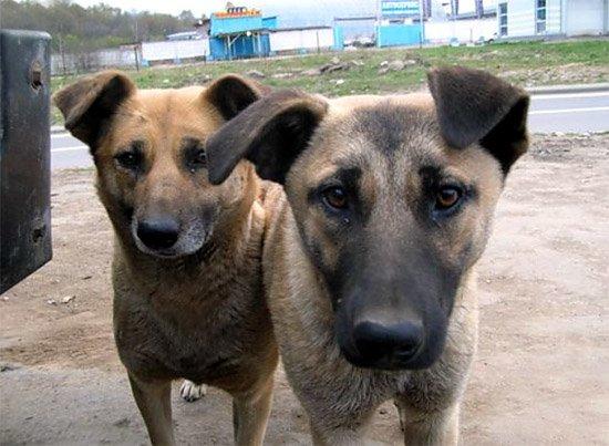 О братьях наших меньших или как помирить людей и собак (фото) - фото 3