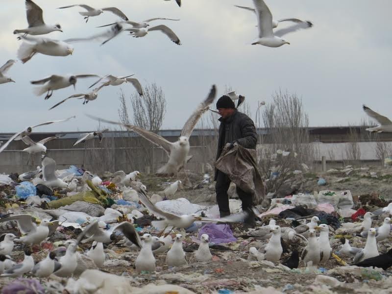 В Мариуполе на полигоне ТБО мусоровоз задавил бездомного (ФОТО), фото-8