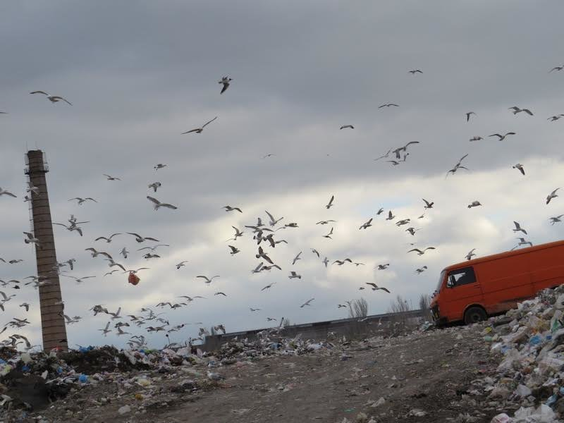 В Мариуполе на полигоне ТБО мусоровоз задавил бездомного (ФОТО), фото-2