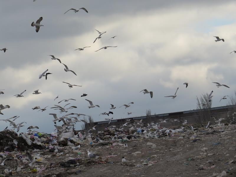 В Мариуполе на полигоне ТБО мусоровоз задавил бездомного (ФОТО), фото-4