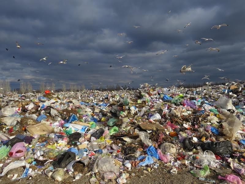 В Мариуполе на полигоне ТБО мусоровоз задавил бездомного (ФОТО), фото-5
