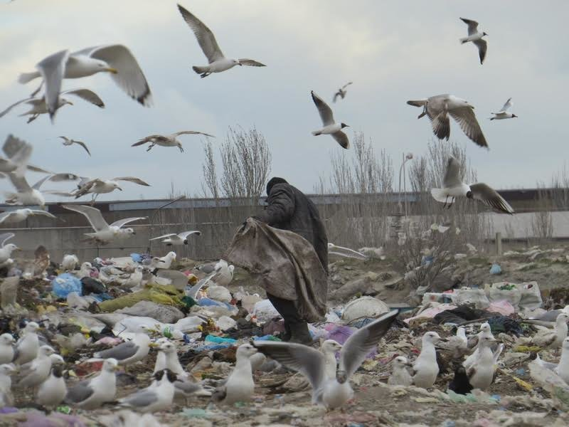 В Мариуполе на полигоне ТБО мусоровоз задавил бездомного (ФОТО), фото-6