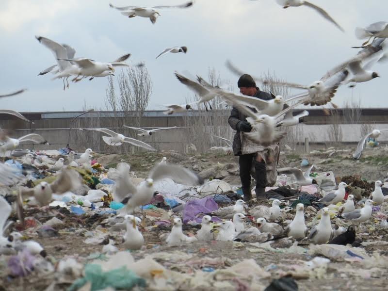 В Мариуполе на полигоне ТБО мусоровоз задавил бездомного (ФОТО), фото-12