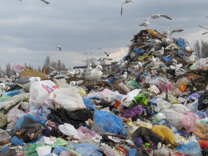 В Мариуполе на полигоне ТБО мусоровоз задавил бездомного (ФОТО), фото-3