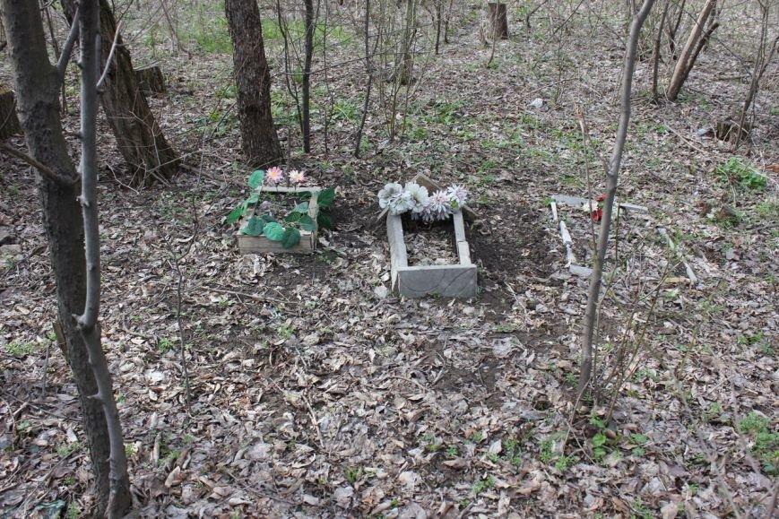 В Мариуполе обнаружено новое кладбище домашних животных (ФОТО) (фото) - фото 1