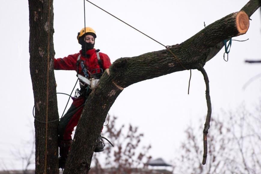 Балаковцы могут способствовать спилу опасных деревьев (фото) - фото 1