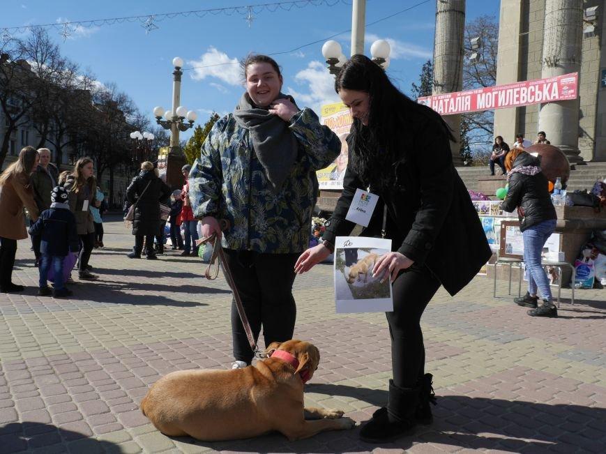 Тернополянка розповіла, як врятувала бійцівського пса (Фото) (фото) - фото 1