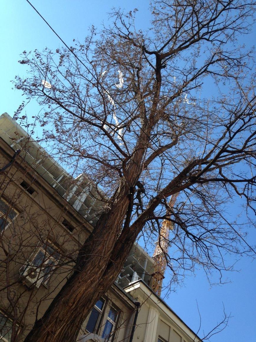 Центр Одессы из-за стройки элитной многоэтажки увешен полиэтиленовыми пакетами (ФОТО) (фото) - фото 1