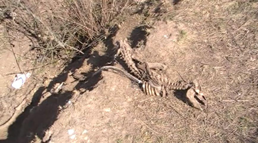 На Хмельниччині виявили несанкціонований скотомогильник (Фото) (фото) - фото 1