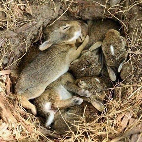 Байдужість людей: внаслідок спалювання сухої трави гинуть зайченята та пташки (ВІДЕО) (фото) - фото 1