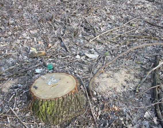 Благодаря сознательным гражданам в Кременчугском районе полиция пресекла незаконную вырубку леса (ФОТО) (фото) - фото 1