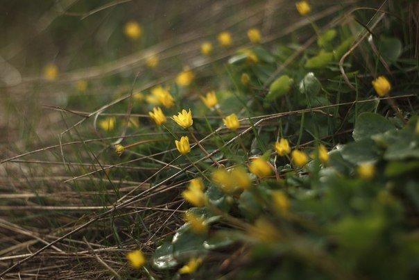 В Макеевке цветут пролески (фото) - фото 3