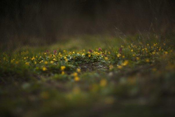В Макеевке цветут пролески (фото) - фото 4