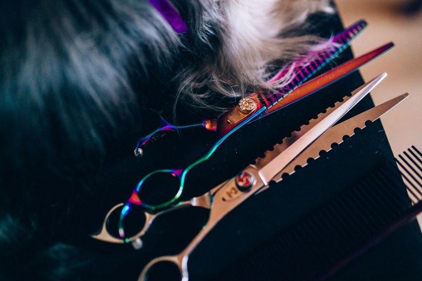 Жительница Новополоцка рассказала, насколько опасна работа парикмахера, чьи клиенты кошки и собаки (фото) - фото 8