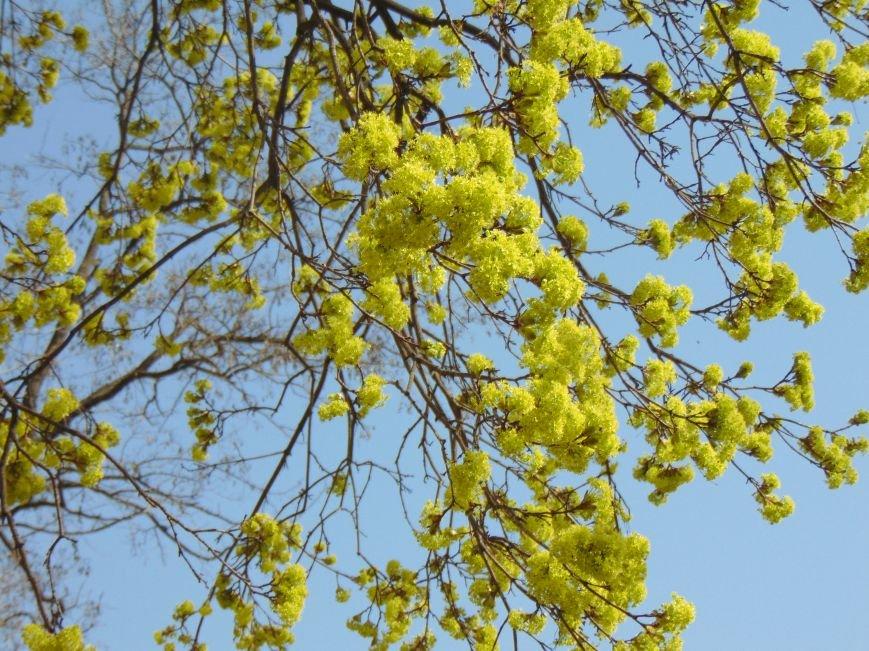 В Мариуполе наступила пора цветения и летняя погода (ФОТОФАКТ) (фото) - фото 2