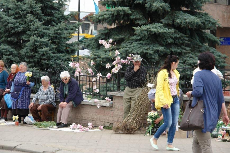 Виживають як можуть. Старенька зрізала гілочки магнолії, що зацвіла, і продає її в центрі міста. Фотофакт (фото) - фото 1
