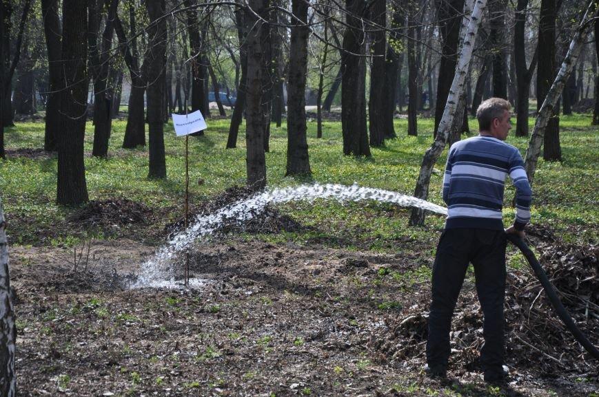 Краматорск присоединился к всемирной акции «Дерево мира», фото-6
