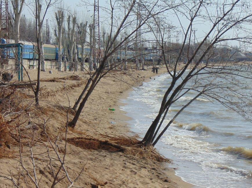 На побережье Мариуполя вырубили деревья (ФОТО) (фото) - фото 1