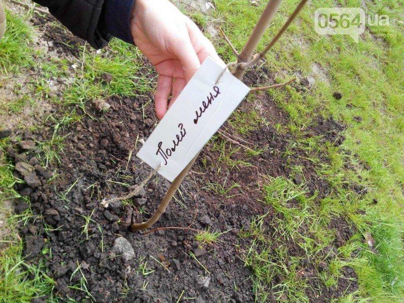 Криворожане высадили на Восточном более 200 саженцев красного клена (ФОТО), фото-12