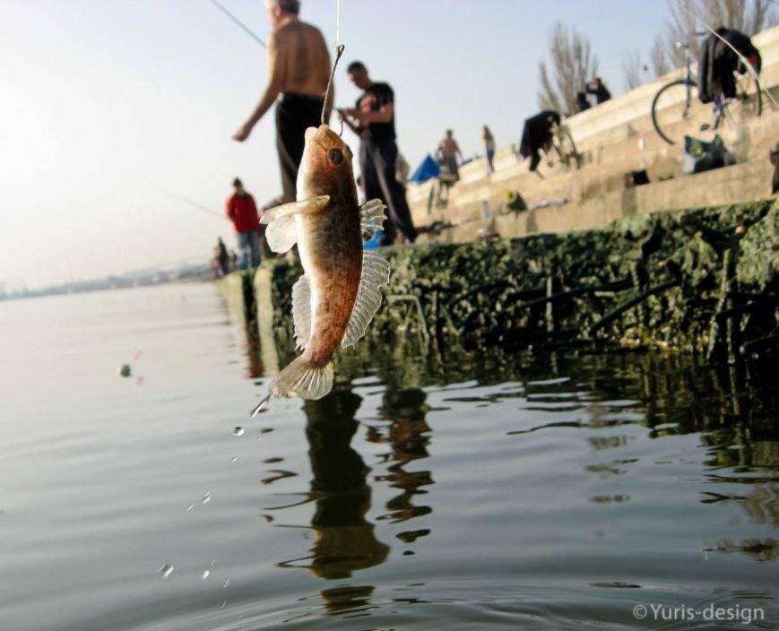 Бердянцы массово вышли на рыбалку (ФОТОРЕПОРТАЖ), фото-3