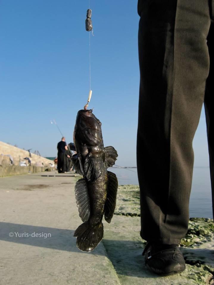 Бердяны массово вышли на рыбалку (ФОТОРЕПОРТАЖ) (фото) - фото 4