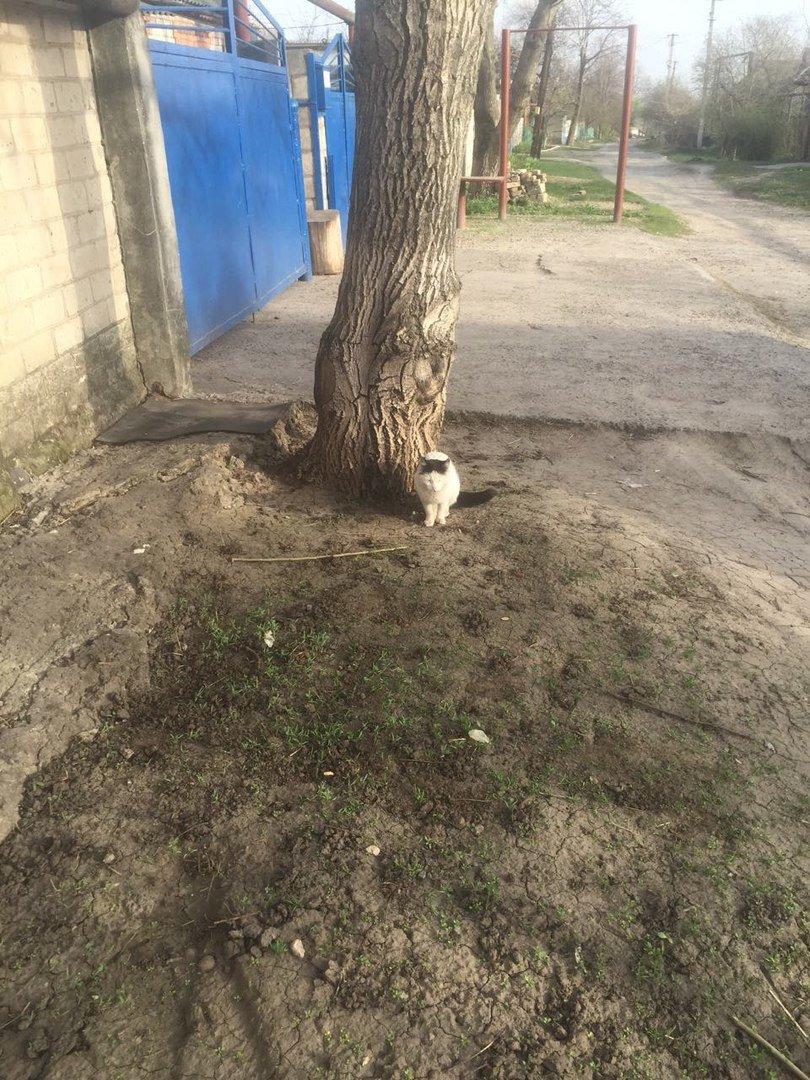 На одного из кандидатов в мэры Кривого Рога совершено нападение (ФОТО) (фото) - фото 2