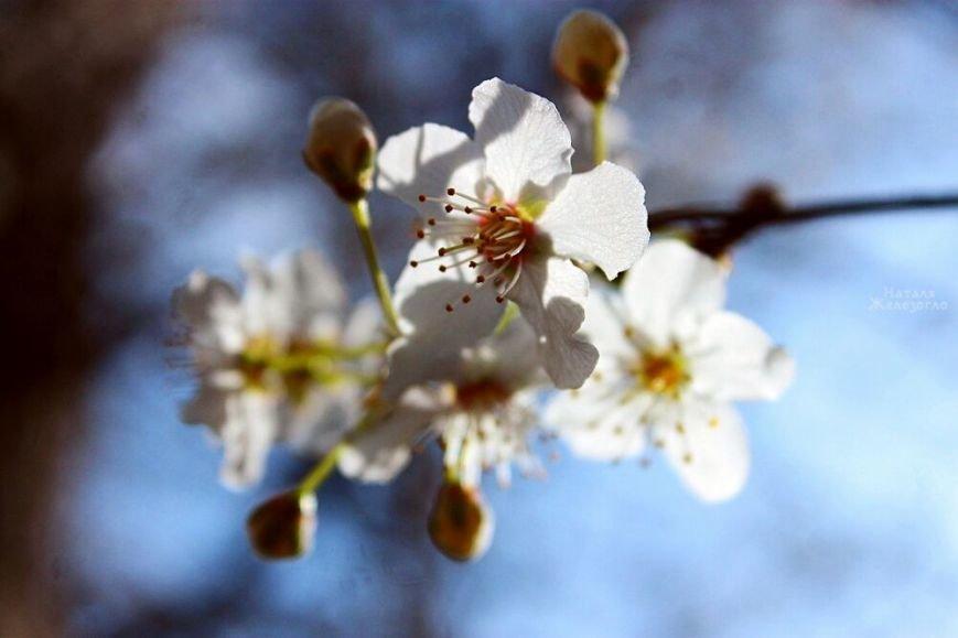 Одесса весной: самые красивые моменты (ФОТО) (фото) - фото 1