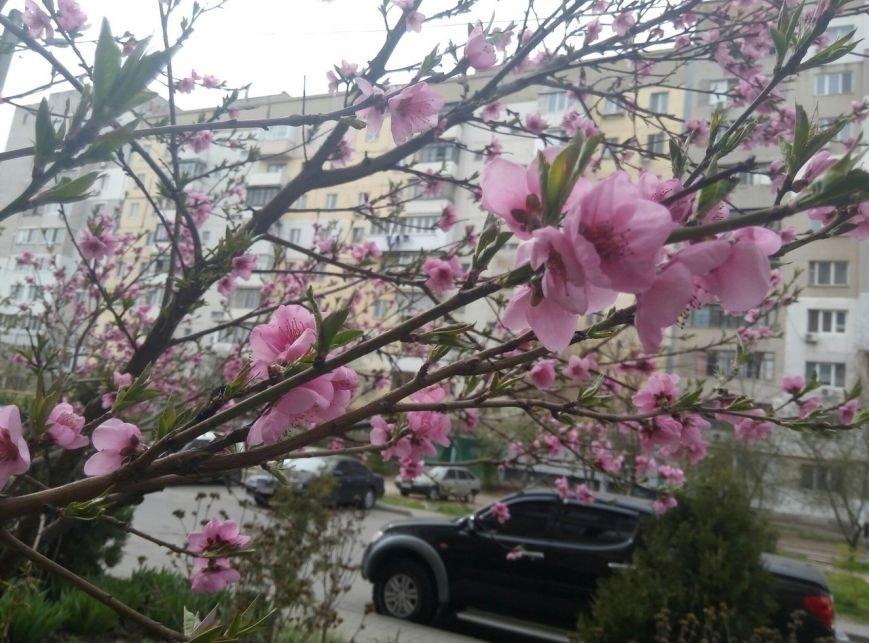 В Одессе зацвела сакура (ФОТО) (фото) - фото 1