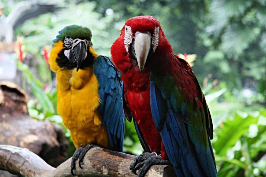 358120,xcitefun-beautiful-bird-2