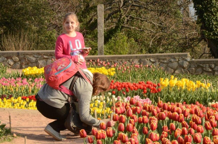 50 000 тюльпанов цветут одновременно в Никитском саду, фото-1