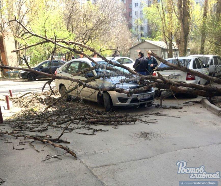 В Ростове на Северном дерево упало на припаркованную машину (фото) - фото 1