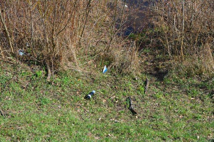 Фотофакт: Новополоцк до и после всемирного дня уборки (фото) - фото 1