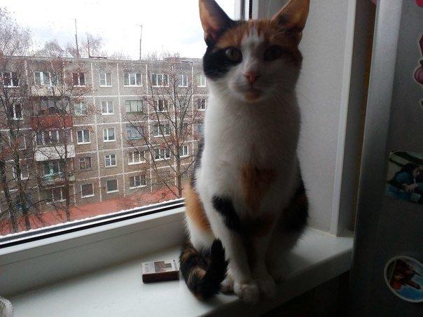 «От котов шума меньше», «Укладываюсь в лимит - два животных в доме»: что еще говорят полочане и новополочане о законопроекте «Об обращении с животными» (фото) - фото 2
