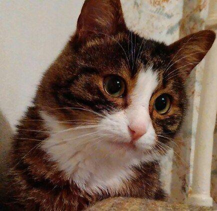 «От котов шума меньше», «Укладываюсь в лимит - два животных в доме»: что еще говорят полочане и новополочане о законопроекте «Об обращении с животными» (фото) - фото 1
