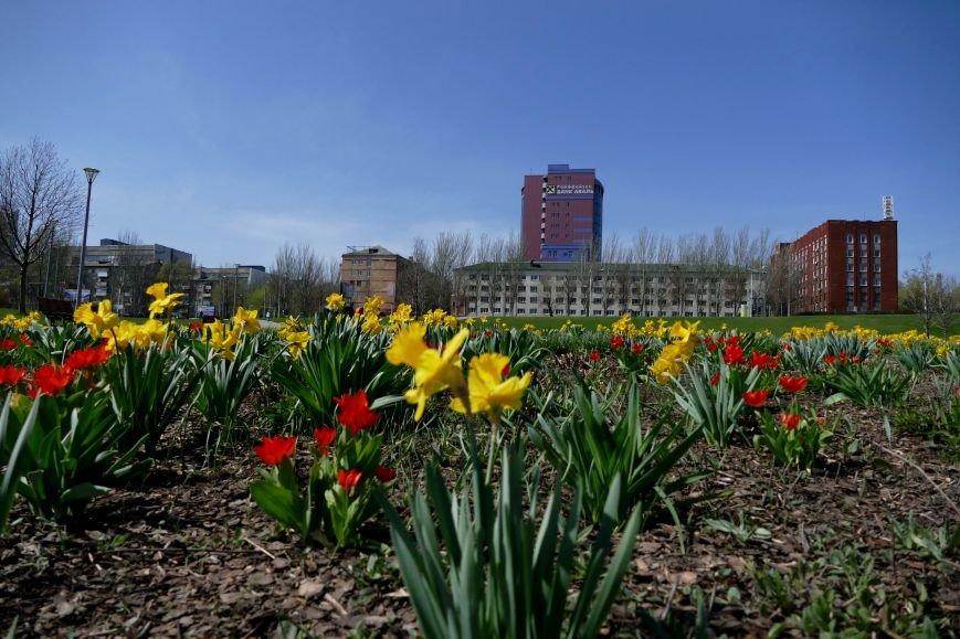 «Донбасс Арена» и ландшафтный парк в лучах апрельского солнца (ФОТО) (фото) - фото 2
