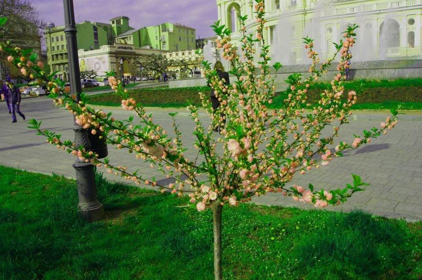 Труханов включил лето: В центре Одессы заиграли фонтаны и цветет сакура (ФОТО) (фото) - фото 1