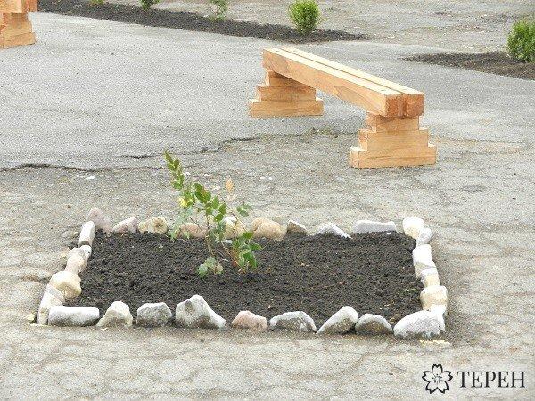 Міні-сквер із рослинами з Червоної книги відкрили у Тернополі (фото) (фото) - фото 1