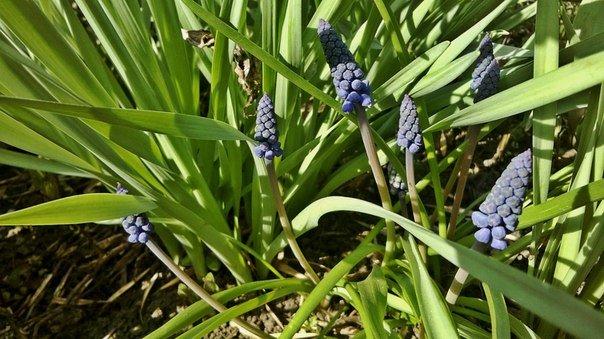 Макеевка расцветает - лучшие фото апрельских цветов (фото) - фото 3