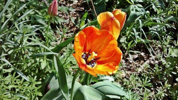 Макеевка расцветает - лучшие фото апрельских цветов (фото) - фото 4
