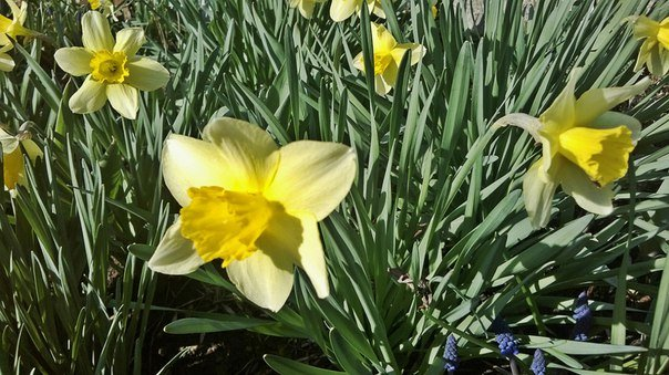 Макеевка расцветает - лучшие фото апрельских цветов (фото) - фото 1