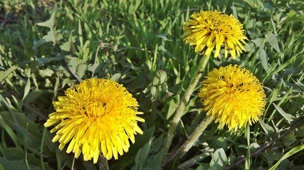 Макеевка расцветает - лучшие фото апрельских цветов (фото) - фото 6