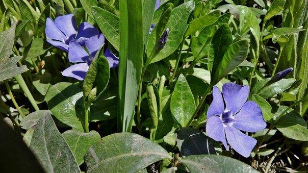 Макеевка расцветает - лучшие фото апрельских цветов (фото) - фото 7