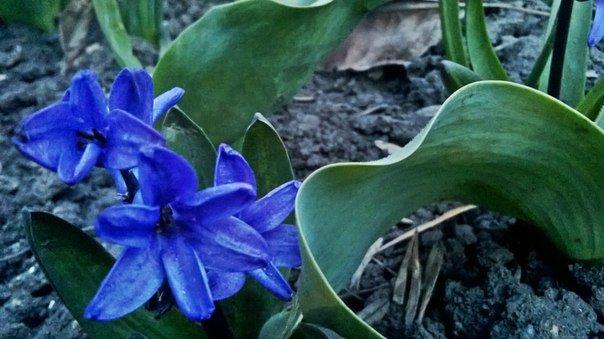 Макеевка расцветает - лучшие фото апрельских цветов (фото) - фото 5
