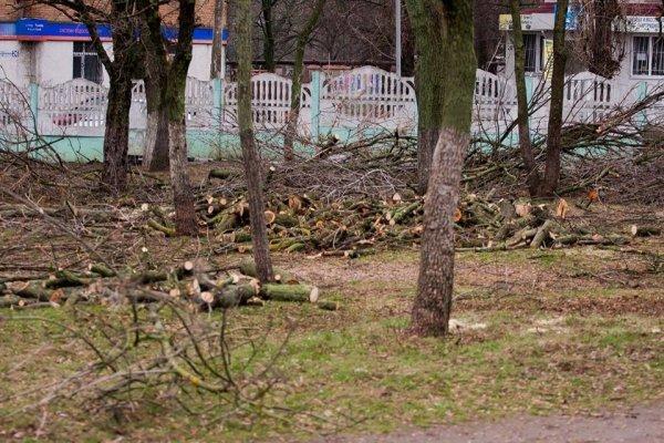 Николаевские коммунальщики снова массово уничтожают деревья (ФОТО) (фото) - фото 6