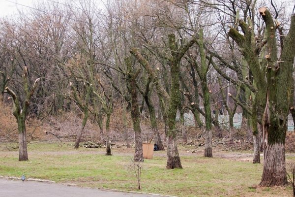 Николаевские коммунальщики снова массово уничтожают деревья (ФОТО) (фото) - фото 5